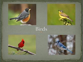 Birds_front1