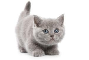 20110527_kitty