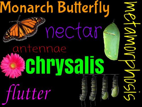 Butterfly word art