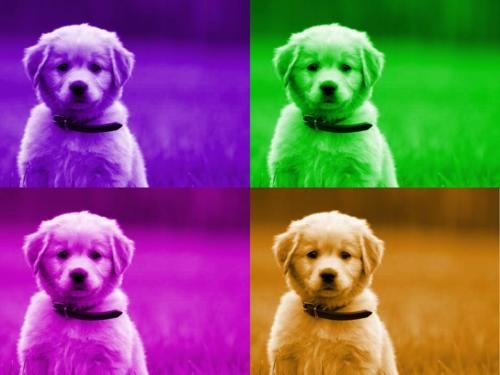 Warhol (1)